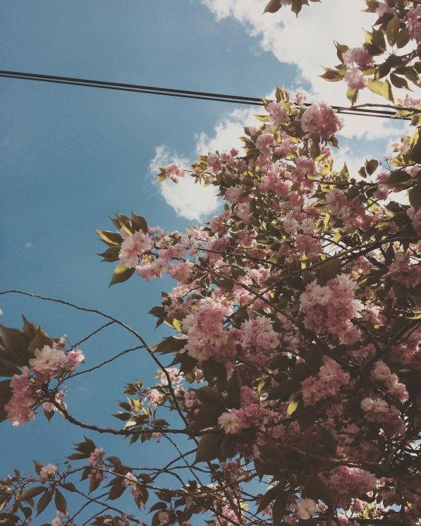 IMG_7513~photo